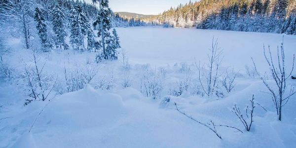 Roha-Fotothek Fürmann - Frillensee im Winter