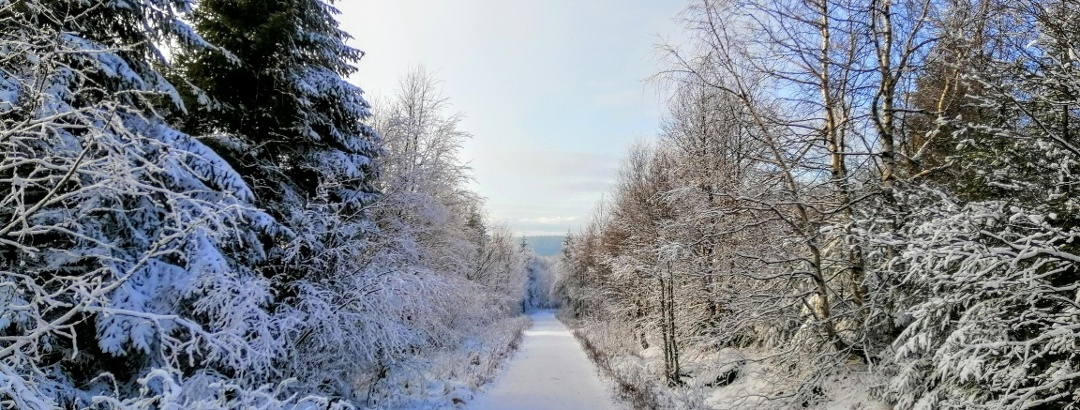 Winterzauber in der Urlaubsregion Altenberg - Lugsteinweg