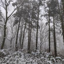 havas erdő