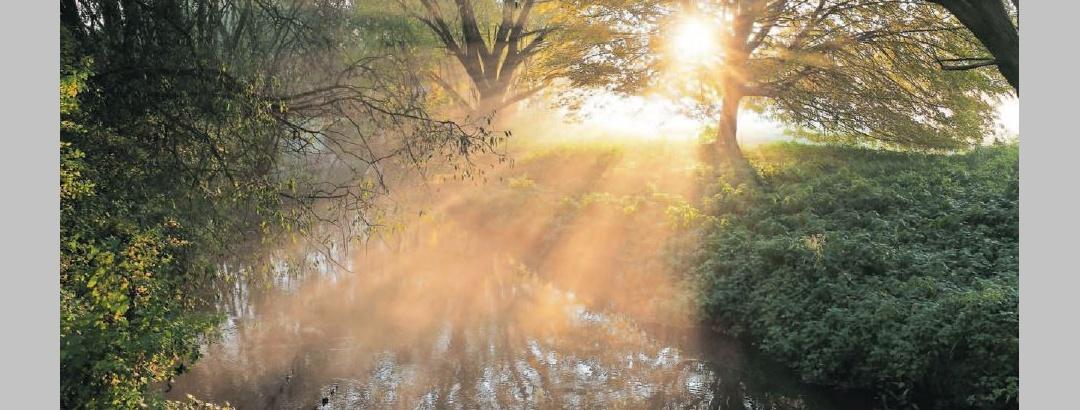Sonne durch Bäume #lieblingsregion