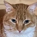 Profilbild von Filou 😸