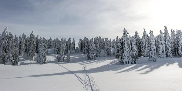 Skitour Tauplitzalm