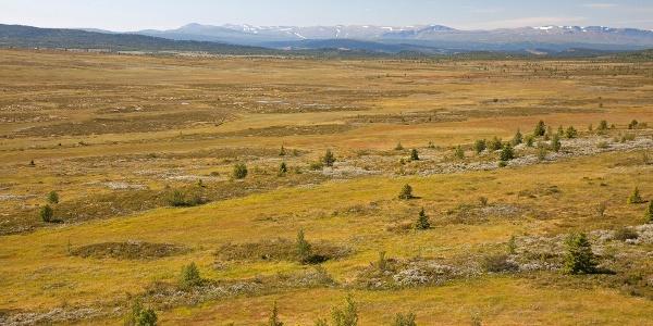 På Gamlestølberget i Kjølaåne naturreservat. Utsyn vest-sydvestover