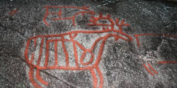 Helleristning av elg Rock carving of an elk