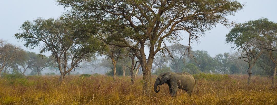 Savanne in Benin