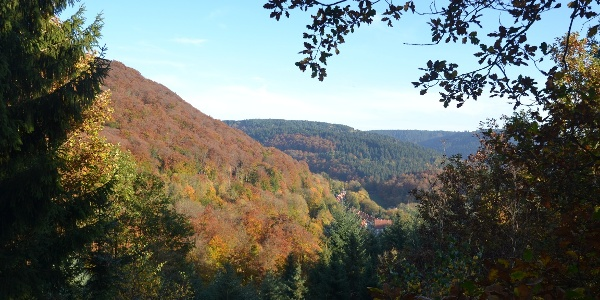 Bad Grund - vom Weltwald Richtung Iberg
