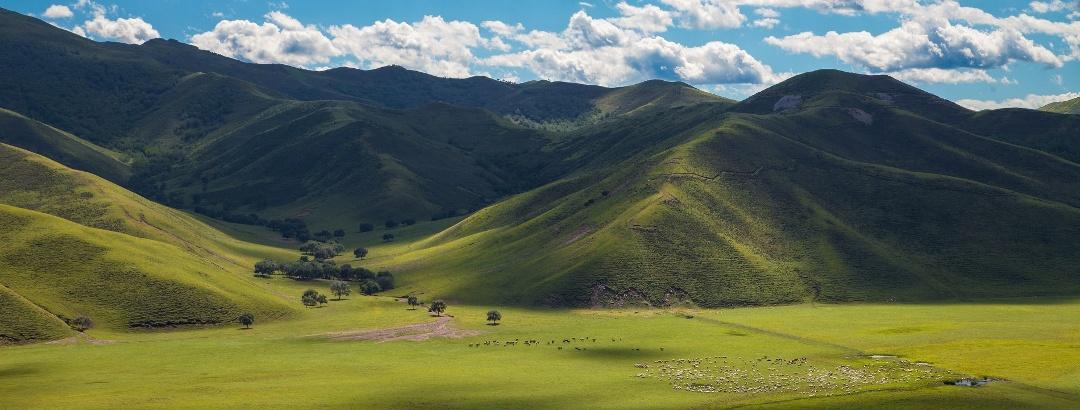 内蒙古 呼伦贝尔市 大草原