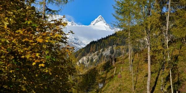 Über Almböden und Wälder geht es den Haritzersteig entlang.