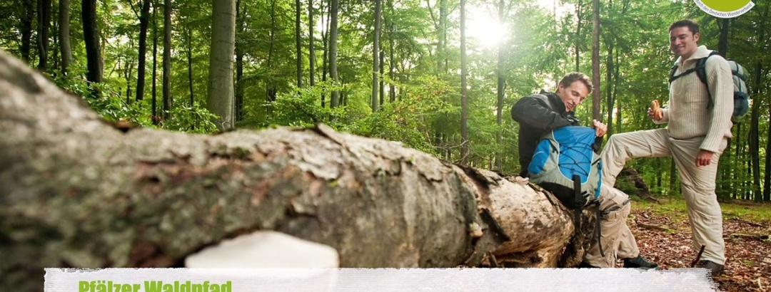 Pfälzer Waldpfad