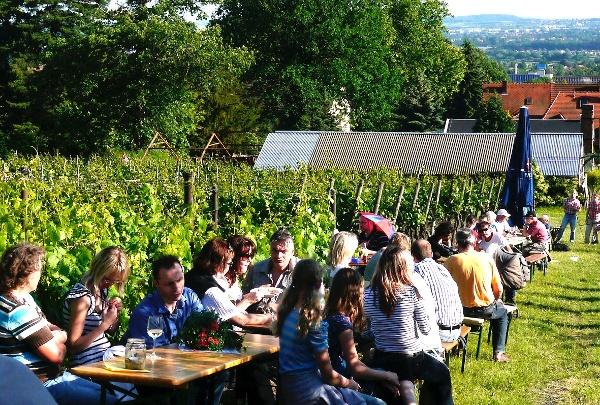 Tage des offenen Weinberges in Radebeul