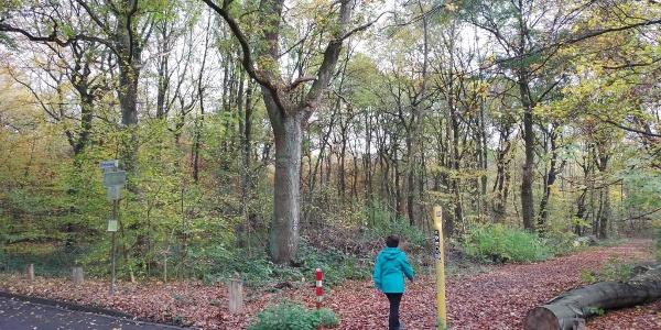 Betreten des Waldes beim Verlassen des Drachensteig