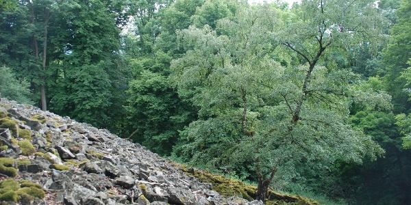 Basaltblockhalde am Stallberg