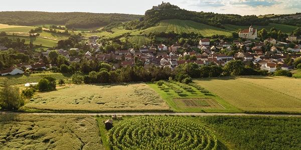Weingartenlabyrinth Falkenstein