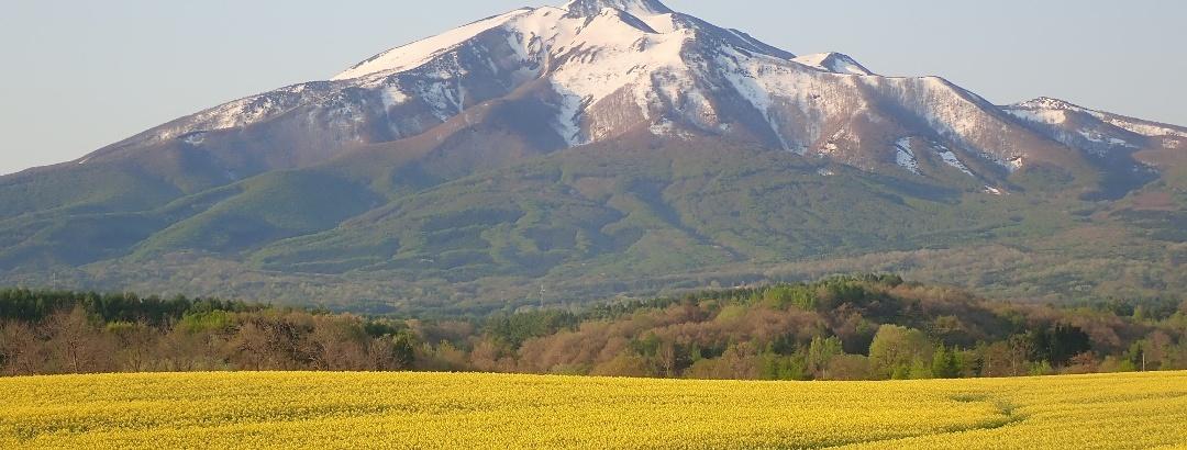 鰺ヶ沢建石の菜の花畑から見た岩木山
