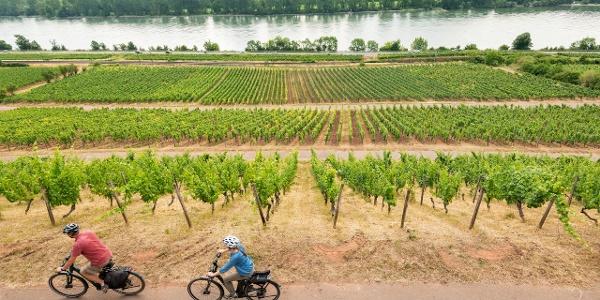 Radfahren am Roten Hang mit Blick auf den Rhein