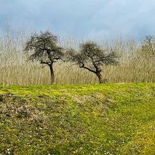 Bäume mit Geschichte