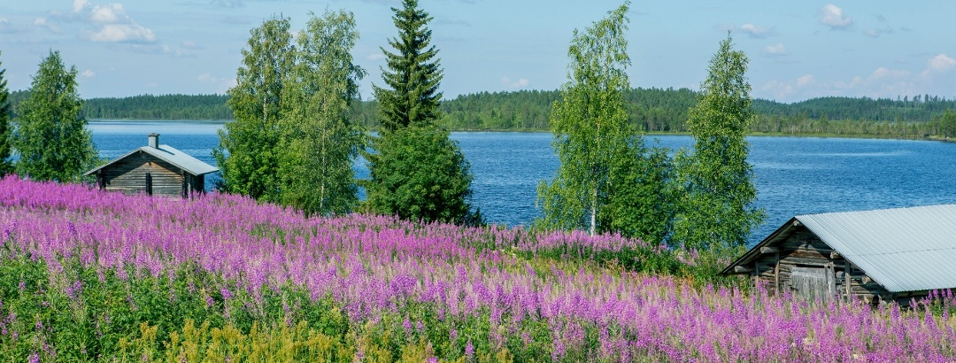 The summer atmosphere of the Wild Taiga region