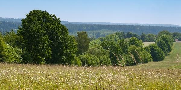 Wiesenlandschaft rund um Beinberg