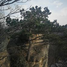 Kő-orr