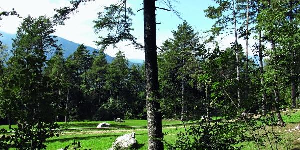 La tranquilla area verde al Pian dei Bindesi