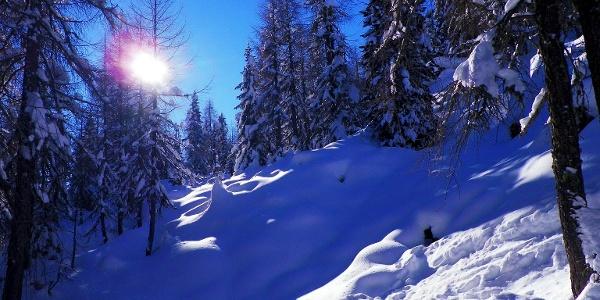 Steil im Wald - Spitzkehre um Spitzkehre - dem Breitbichl entgegen.