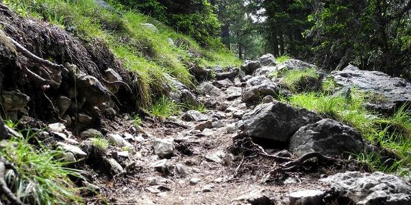 Wandern um Höhenmeter zu gewinnen. Über den Steig 17 in Richtung Stevia Hütte.