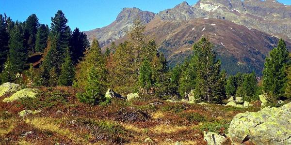 Blickfang Sarntaler Weißhorn auf dem Wege zum Tagewaldhorn.