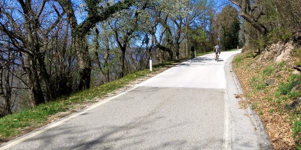 Dies Tour verläuft größtenteils auf Asphalt in der Hügellandschaft Valtenesi.