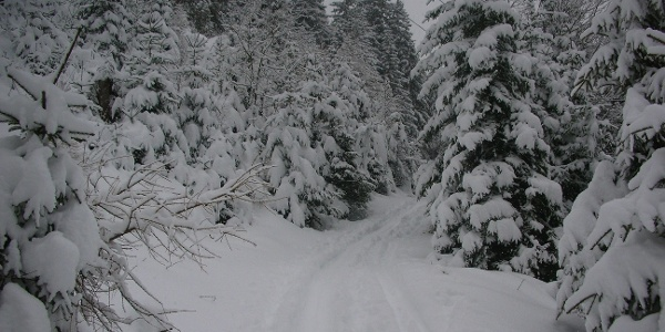 Durch verschneite Wälder streifen - am Nordhang des Kronplatzes.