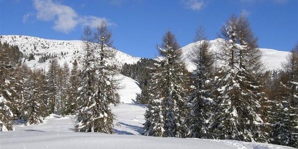 Skitour durch tief verschneiten Pustertaler Wald.