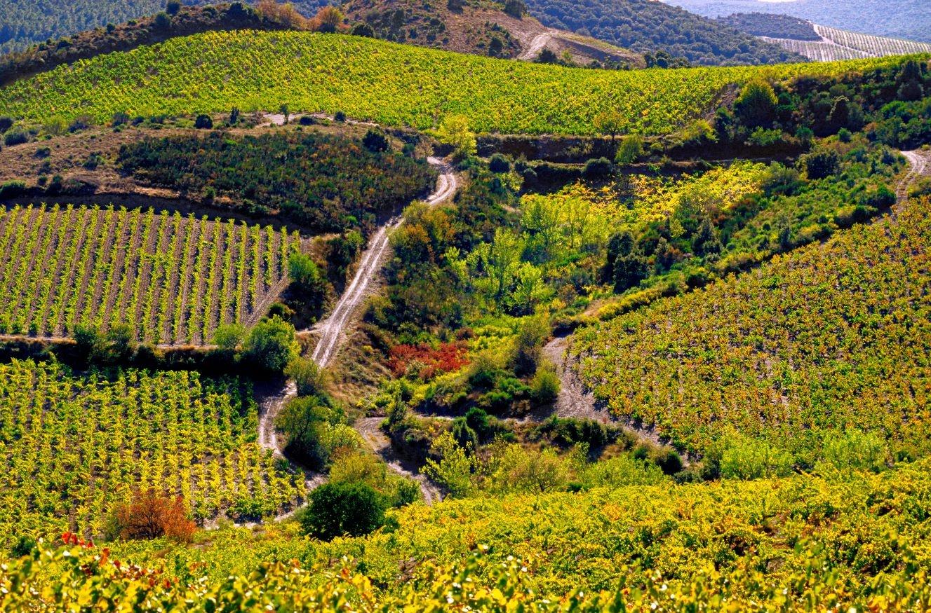 Corbieres vineyards during fall season