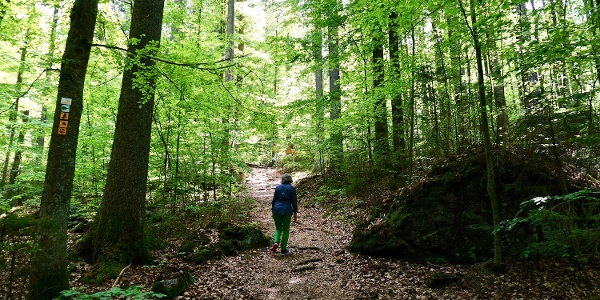 Weg zum Hochbergsattel