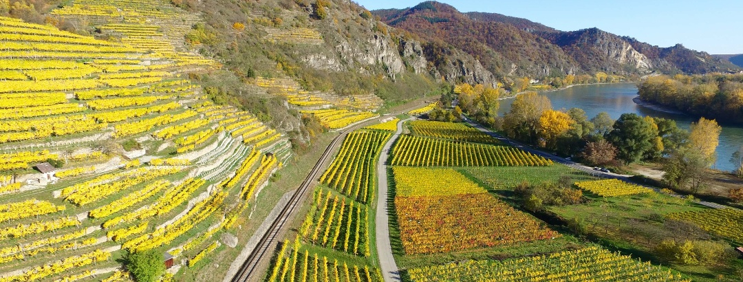Wandern in Weißenkirchen in der Wachau