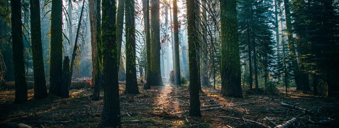 Wandern im Westerwaldkreis