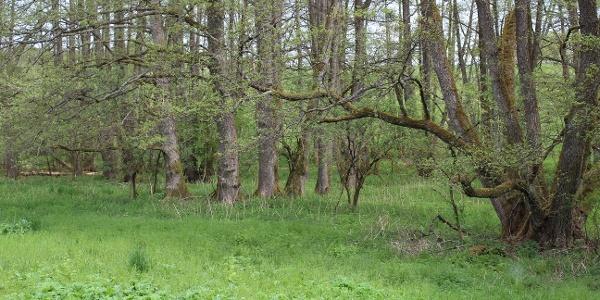 NABU-Schutzgebiet