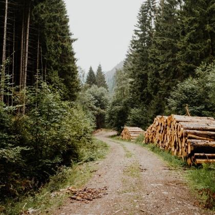 Wandern in Tharandt