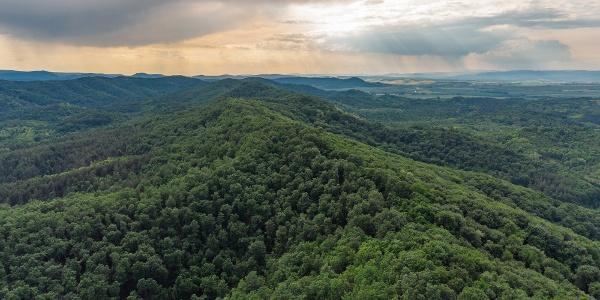 Keskeny gerincű erdőhát a kárpáti vihar útjában