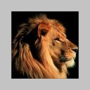 Profile picture of stefano sanesi
