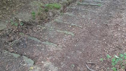 The Donkey steps