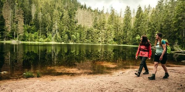 Wildsee im Nationalpark Schwarzwald