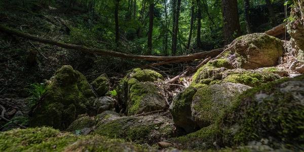 A Sárkány-szakadék mohos sziklái