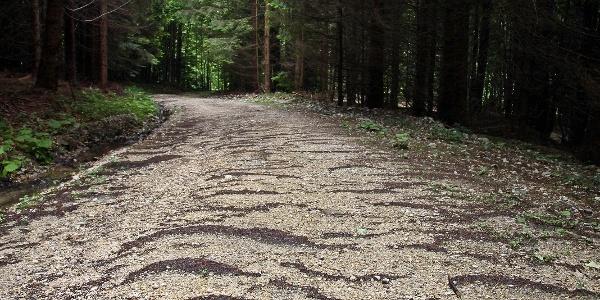 Forestierul care trece prin Cheile Babarunca