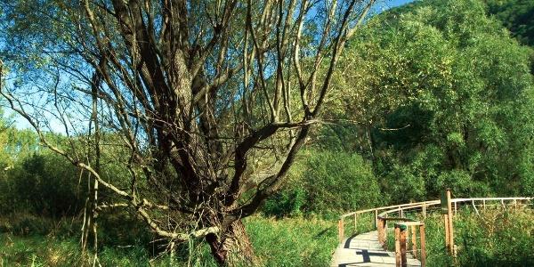 Vielfalt: Das Biotop Kalterer See ist Lebensraum für unzählige Vogelarten