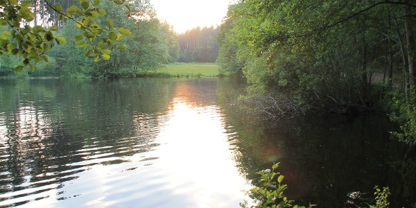 Schwarze Teich bei Burkersdorf