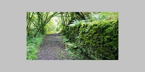 Waldweg im Mühltal