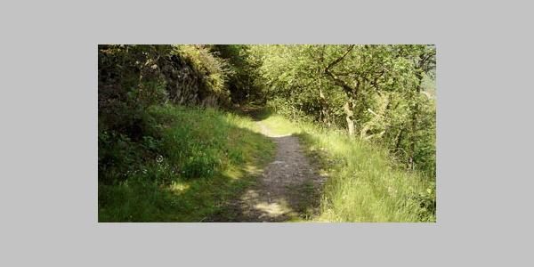 Waldweg bei Holzfeld