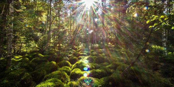 Naturhighlight Würzbacher Moor