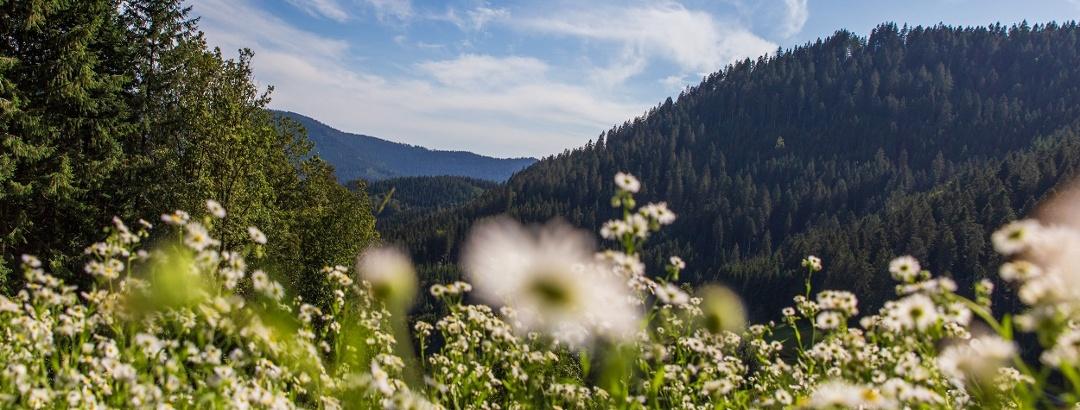 Blühende Bergwiesen