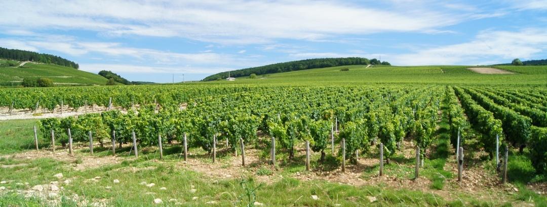 Sur la route des vins de Bourgogne