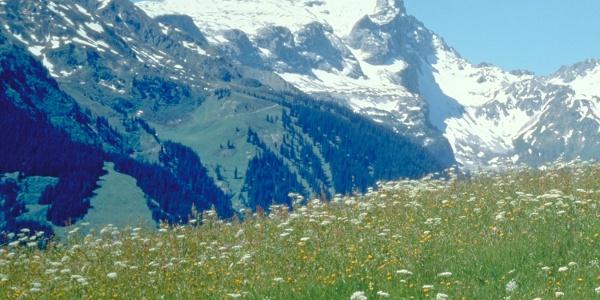 Links das Schwarzhorn, rechts die Sulzfluh